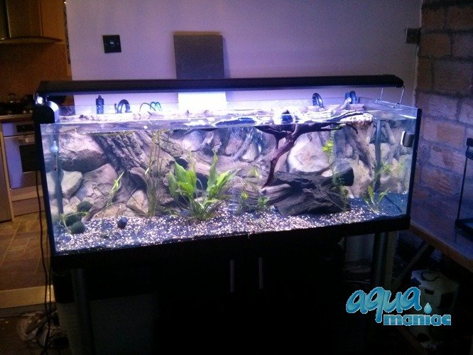 aquarium background for juwel rio 400 aquarium 3d amazon background. Black Bedroom Furniture Sets. Home Design Ideas
