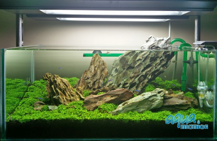 Dragon Stone For Aquarium Hard Scape Iwagumi Style