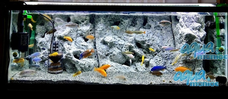 Modules of Limestone Background to fit 120X60cm aquarium