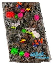 Module Limestone Background 50x40cm with corals