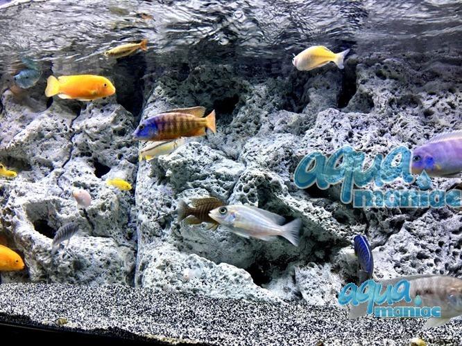 Modules of Limestone Background size:150x45cm aquarium