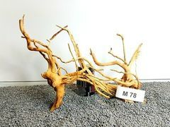 2x Red Moore Roots