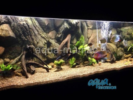 3D Amazon Background 239x56cm in 4 section to fit 8 foot by 2 foot tanks