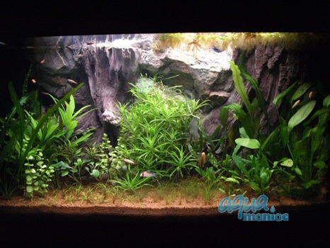 Fluval Roma 125 root background 77x42cm 1 section