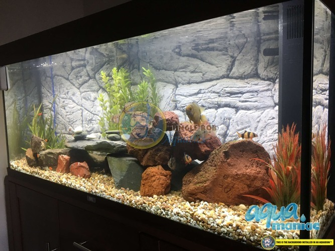 Fluval Roma 125 thin rock background 77x42cm 1 section