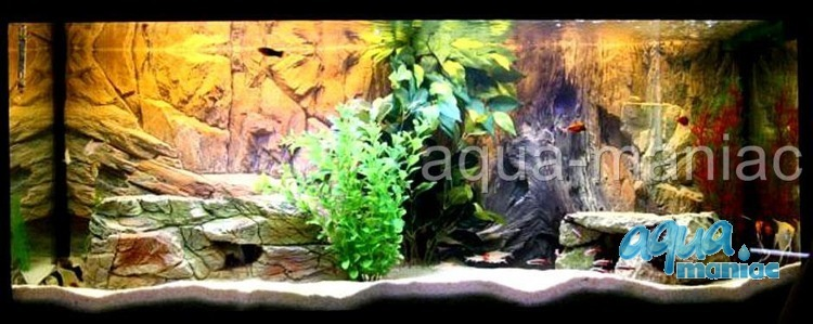 Fluval Roma 200 root with vents background 97x45cm 2 sections