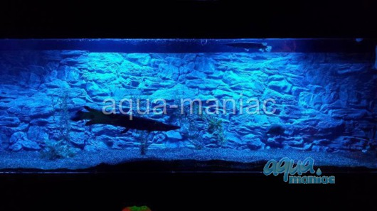 JUWEL Vision 180 3D thin rock background 90x45 cm in 2 sections