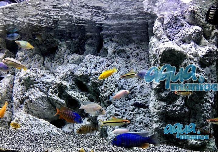 Modules of Limestone Background size:180x54cm aquarium