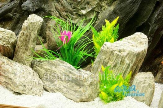 Natural Wood Stone