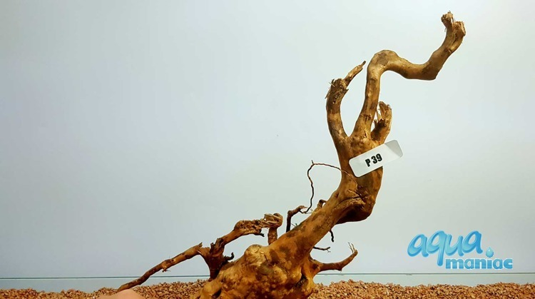 Red Moore Root size  46x13cm
