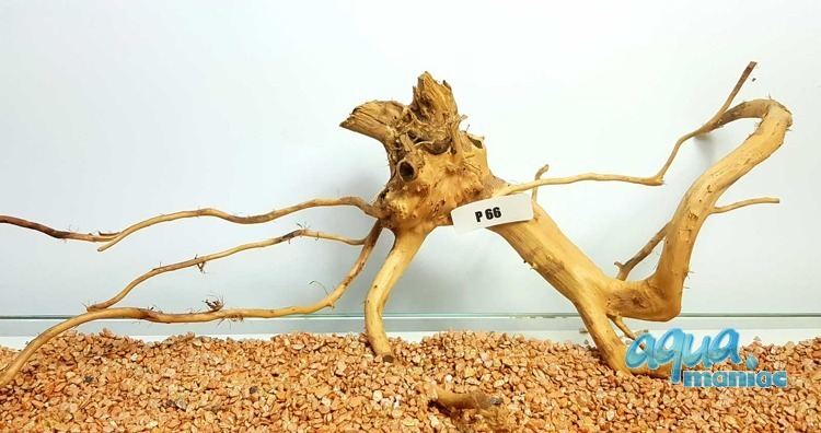 Red Moore Root size  53x13cm