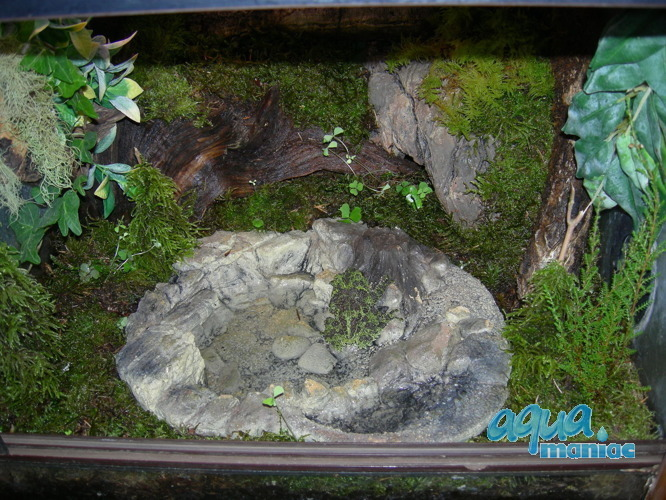Terrarium Pool for reptiles - medium