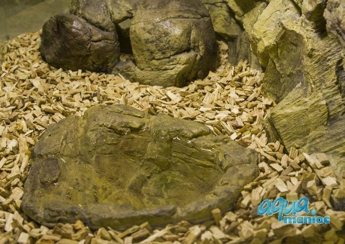 Terrarium Pool for reptiles - mini