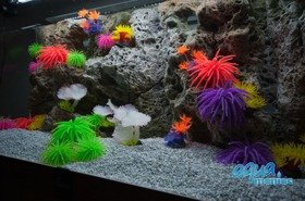 Modules of Limestone Background with corals to fit 240x60cm aquarium
